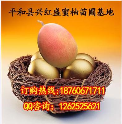 平和县兴红盛苗木培育中心