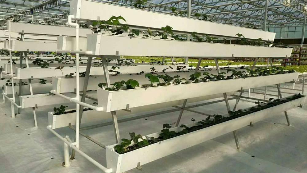 重庆温室草莓槽立体种植的应用华耀现场展示