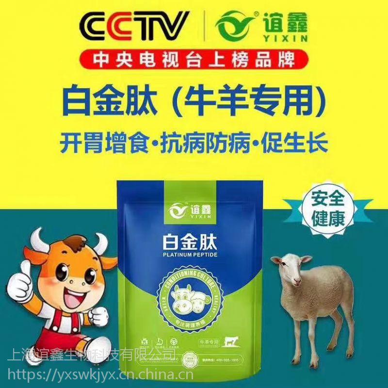 肉牛催肥绝招 肉牛催肥方法 白金肽