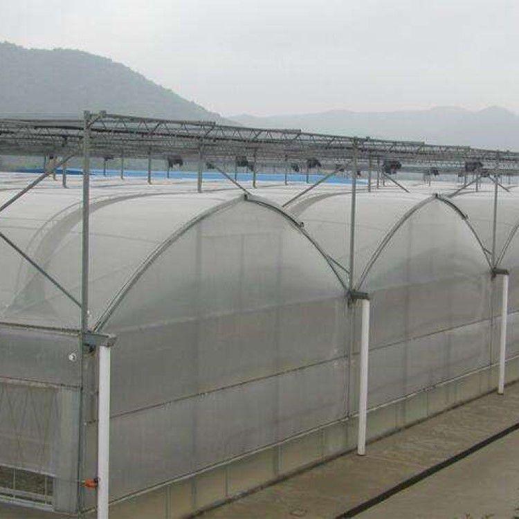 蔬菜花卉连栋薄膜温室大棚