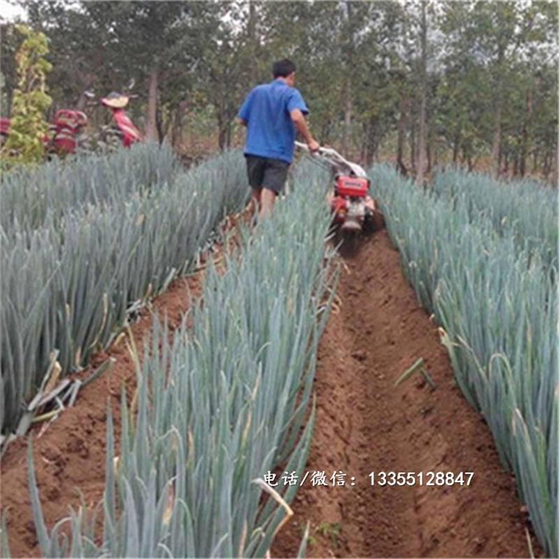 轻便手扶大葱培土机农用小型开沟培土机多功能农用起垄开沟机
