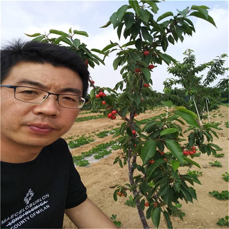 品种樱桃苗种植,矮化樱桃苗批发,当年结果