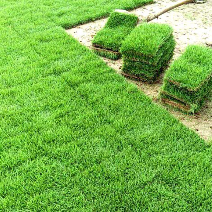供应 马尼拉草皮 百慕大草坪 庭院绿化种植草种 基地报价