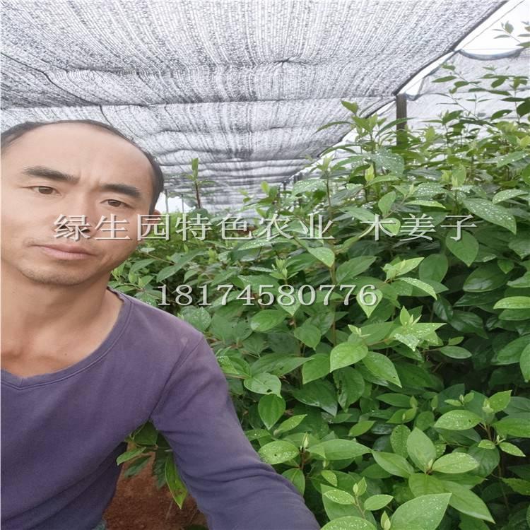 綠生園木姜子苗木基地視頻