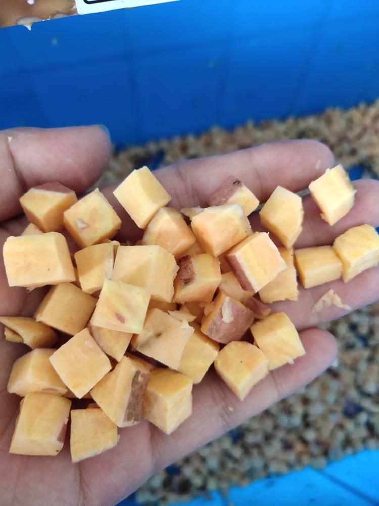 地瓜切丁机 番薯切丁机 马铃薯切丁机