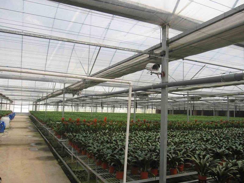 连栋温室大棚苗床种植花卉