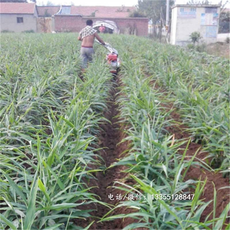 大棚種植開溝機大蔥生姜起壟培土機汽油柴油開溝機廠家直銷