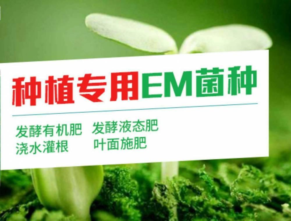 Em菌种什么价格 em菌种如何使用
