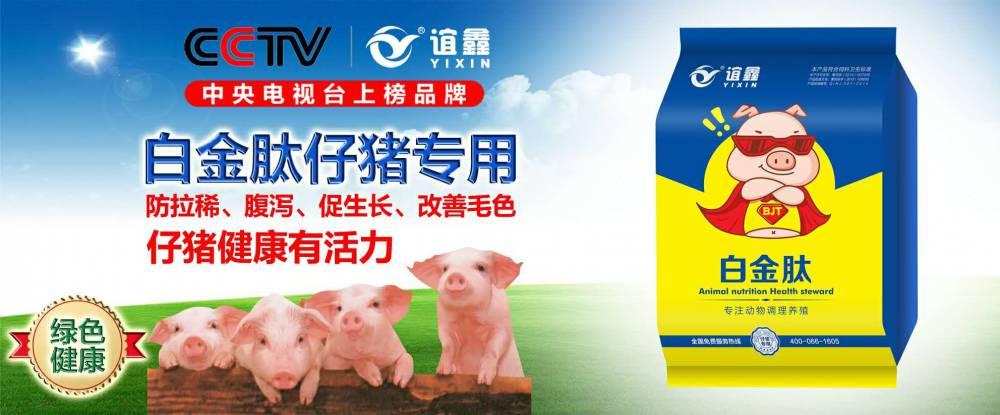 小猪用了白金肽长得就是快   仔猪催肥用什么