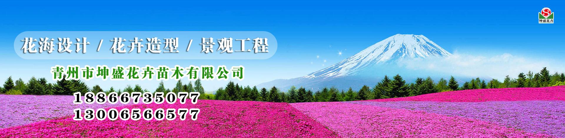 青州市坤盛花卉苗木有限公司