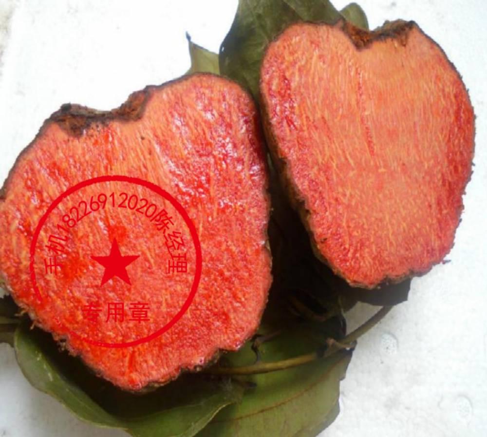 薯莨血三七批發 血三七的功效和作用 血三七價格