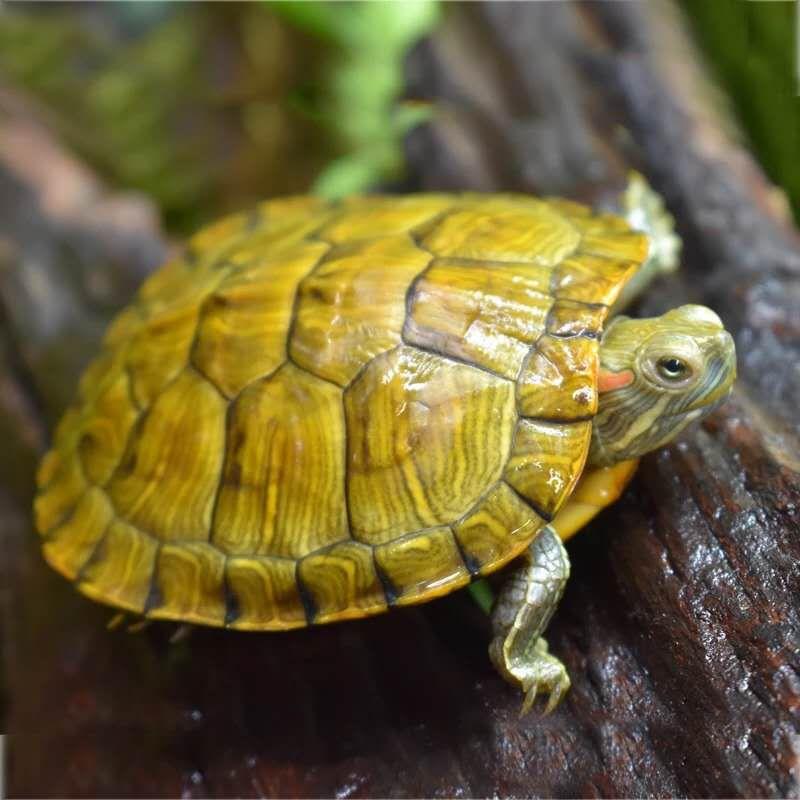 物陆龟水果粮饲料加工设备 乌龟粮加工机器生产视频