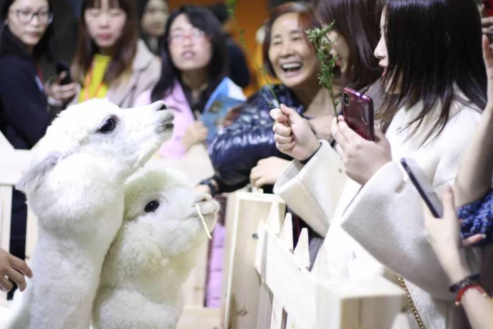 2020年9月CPF华中武汉宠物展与众多宠友不见不散