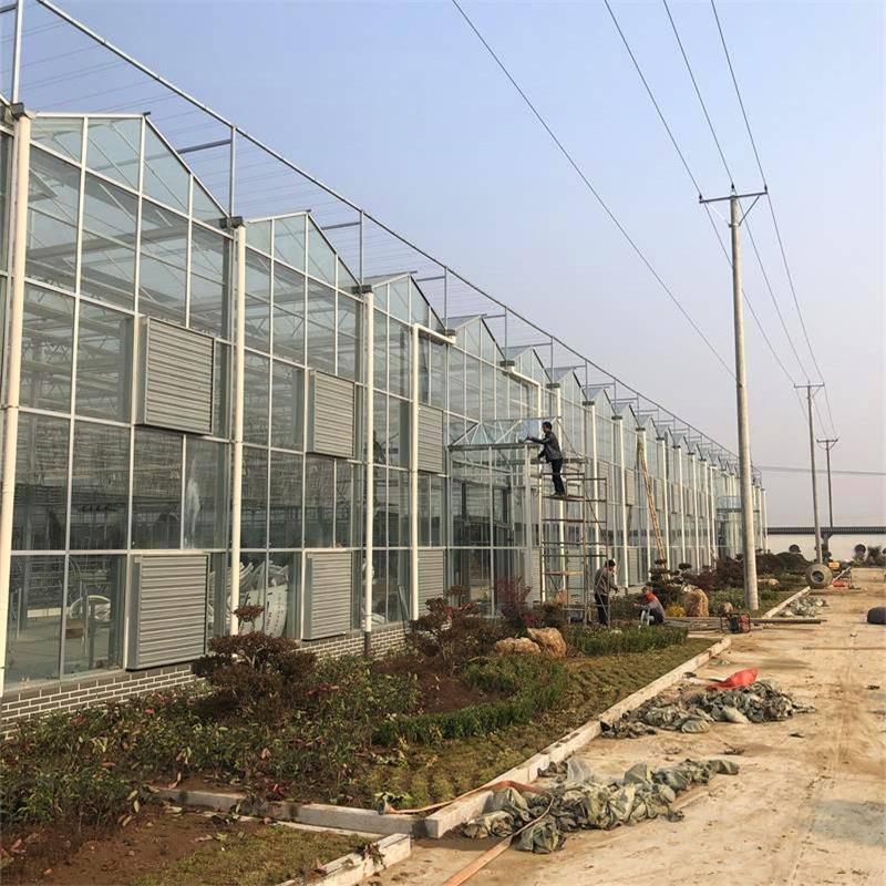 新型农业温室大棚建设 金沣 连栋温室大棚厂家 第五代温室大棚