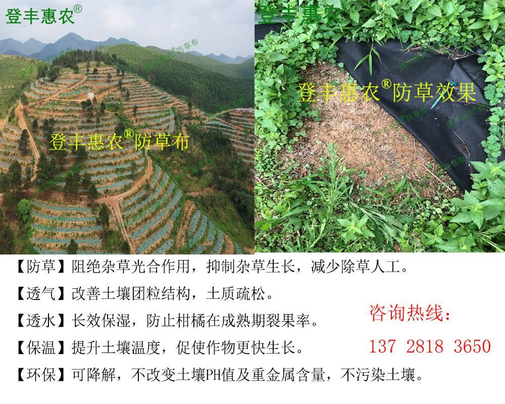 生态防草布-药材和坚果篇