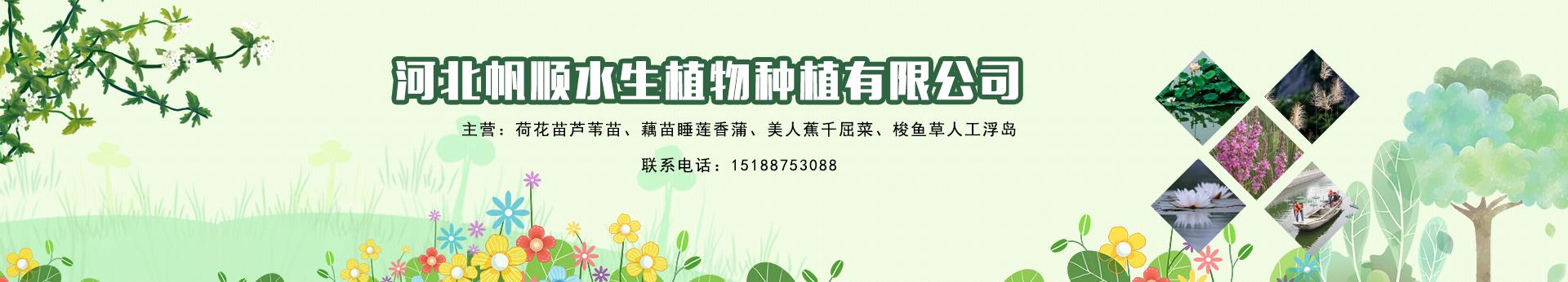 河北帆顺水生植物种植有限公司