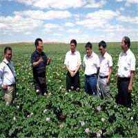 土豆种子供应2016春季土豆种子种植基地