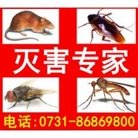 奥亚灭鼠除虫专业提供酒店/宾馆/工厂/家庭灭鼠杀虫服务,灭蟑螂服务灭跳蚤服务灭蚊蝇服务