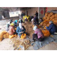 2015土豆种子春季马铃薯种子