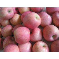 今日陕西冷库红富士苹果价格行情,热线:18700362219