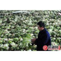 供应湛江蔬菜保鲜库湛江蔬菜冷库设计湛江蔬菜保鲜技术