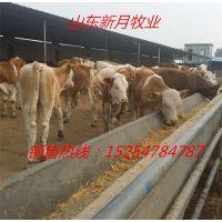 陕西哪里有卖西门塔尔牛犊的-西门塔尔育肥牛的价格