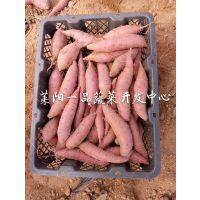 日本甘薯品种高系14号