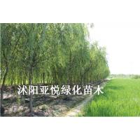 供应江苏别墅绿化苗木 厂区工厂绿化苗木 绿化工程苗木