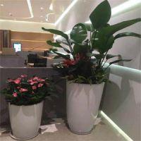 深圳市龙华绿美城园林花卉车公庙办公植物租赁养护