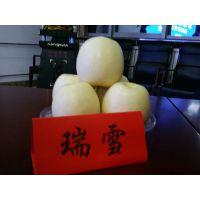 壹棵树 红肉苹果苗 矮化苹果苗新品种 欢迎选购