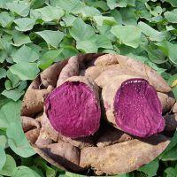 润木供应紫薯提取物紫薯粉全溶于水