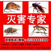 灭鼠公司加盟灭鼠技术培训/的技术/***的服务尽在战虫网找战虫卫士