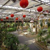 花卉市场_河南高性价花卉市场温室大棚