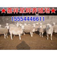 养羊场养一只白头杜泊羊能用多少成本,种羊技术赚钱是多少啊?
