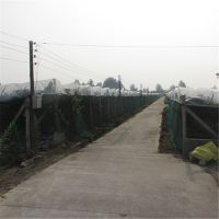 供应葡萄塑料大棚膜 葡萄园大棚膜 葡萄大棚专用膜 葡萄专用膜