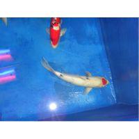 环保型鱼池防水装饰漆耐酸碱环氧鱼池防水装饰漆厂家