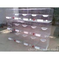 三层鸽子笼厂家,安平飞创,镀锌鸽笼,铁丝鸽笼怎么组装13784187308李