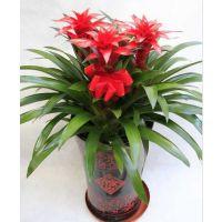 杭州租植物哪家好 青友园艺 服务百家企业,花卉租摆优质价格公道