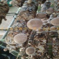 大连出口香菇菌棒商检备案自理报关报检香菇菌包蘑菇菌丝