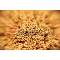 ab8 吸附树脂颗粒用于提取黄酮类物质用于红车轴黄酮、山楂黄酮、沙棘黄酮、广枣黄酮、葛根总黄酮等