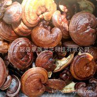 椴木栽培 泰山赤灵芝 韩芝 菌盖厚 灵芝片 赤芝 品相好 出口品质