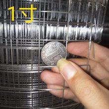 铁丝网养殖围网 厂家供应不锈钢铁丝网