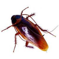 烟台市龙口蓬莱专业灭蟑螂灭老鼠灭鼠服务公司