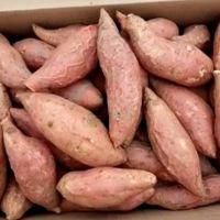 山东烟台市蓬莱市 销售烟薯25 烟台红薯 专售