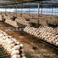 灵芝产地大量供应优质灵芝菌种 灵芝种子 灵芝菌棒菌袋 灵芝菌包