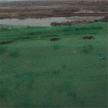 盖土网图片绿色 盖土的网 泰州建筑安全网