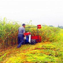 无损失的黄豆牧草割晒机 手推汽油四冲程收割机 侧放割晾机