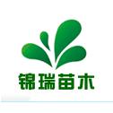 沭阳县锦瑞绿化苗木场