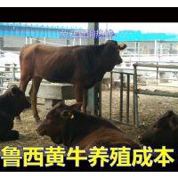 湖南地区适合养殖黄牛 牛犊 黄牛犊***价格 忠义牧业