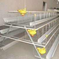 肉鸡笼 蛋鸡笼 养殖鸡笼 飞创丝网全国发货 养鸡笼